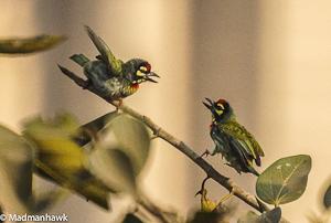 The End of Armchair Birding