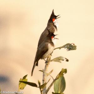 Birding in Mumbai. It's possible.